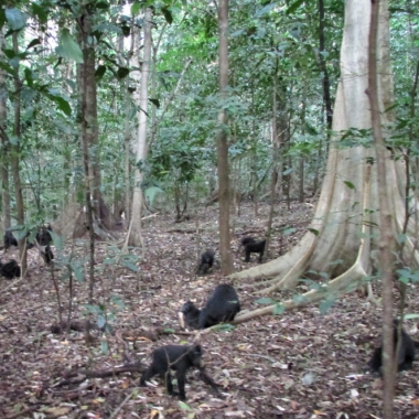 Tangkoko Nature Reserve Overnight Tour (2D/1N)